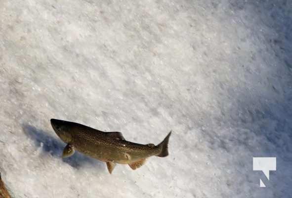 Salmon Ganaraska River Port Hope September 9, 20210568